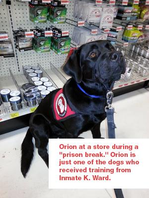 orion-2-web---3