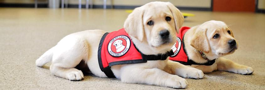 10-Volunteer-Puppy-Raiser2