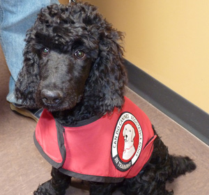 Hearing-Assist-Dog-Fred-web