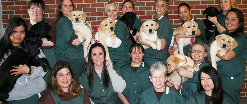 Prisons Trainning Service Dogs