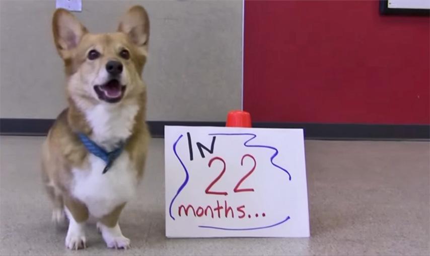 22-months-web