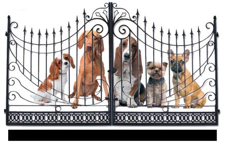 pet gate graphic