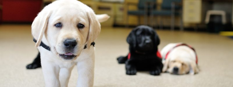 2014-08-27-s-litter-posed-pupppy-photos-019
