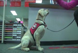 Wqow Eau Claire News Service Dog Training Program Needs Volunteers