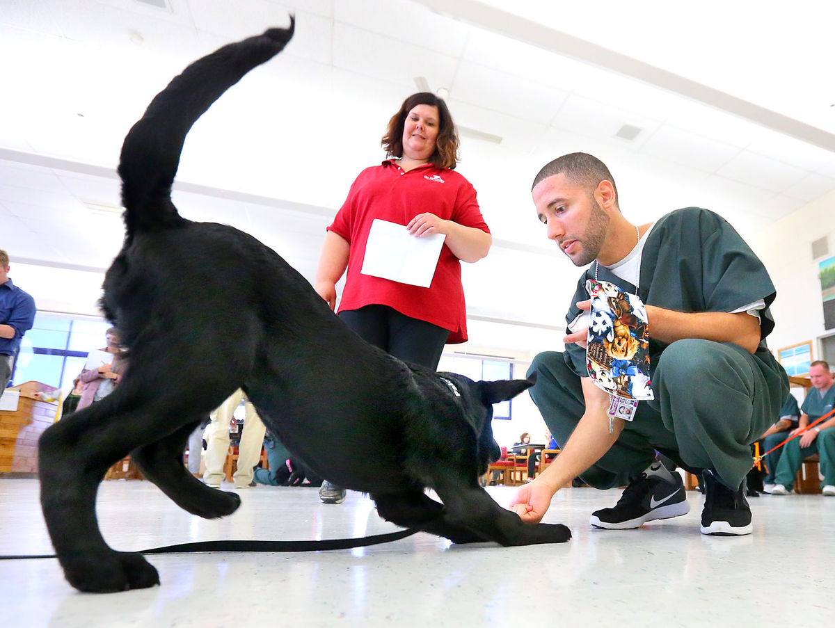 La Crosse Tribune | Can Do Canines Pairs Puppies with Prisoners