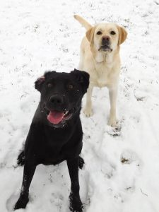 black dog and white dog in snow