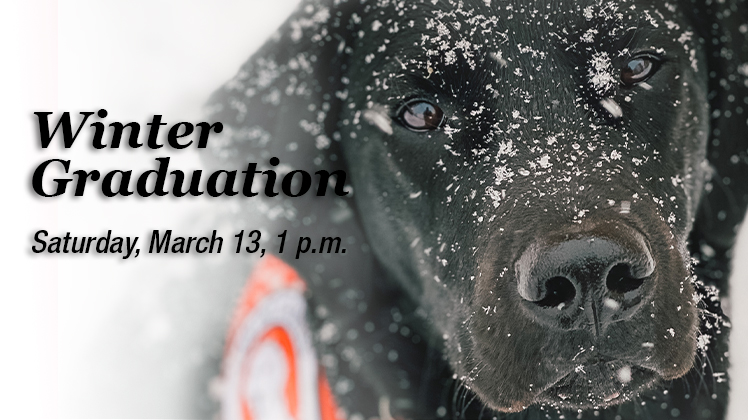 Black lab with snow in his face looking at the camera. Text over the photo reads,