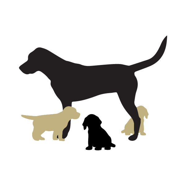 Adult dog with three puppies