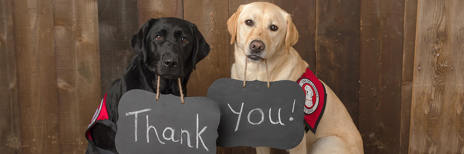 Two dogs holding up signs with their mouths saying Thank You!