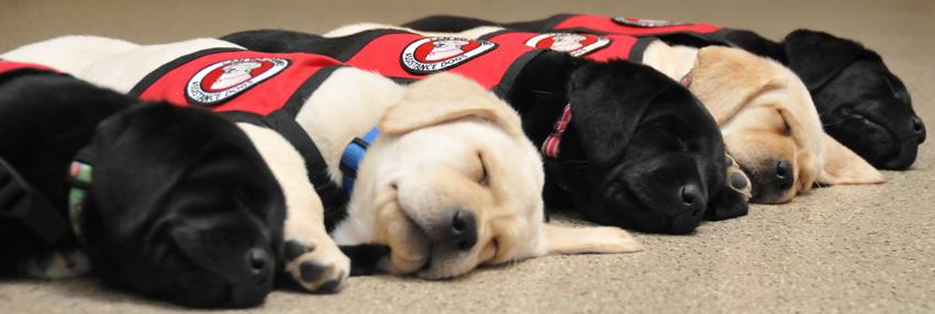 Row of puppies sleeping