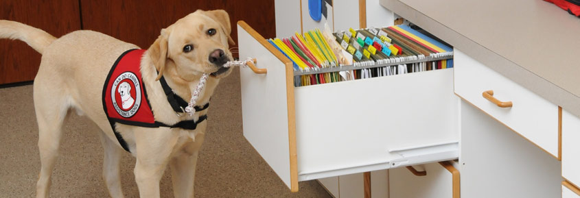 Dog pulling file cabinet open with rope