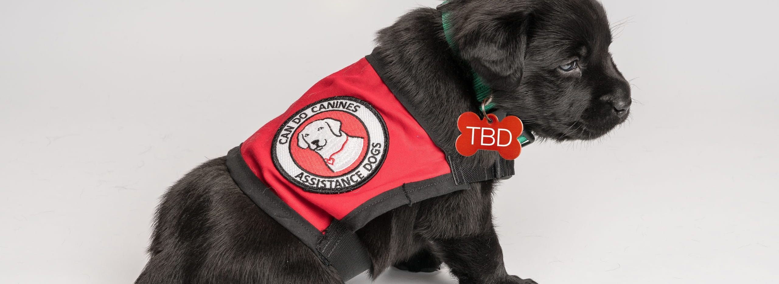Puppy with TBD dog tag on it's collar