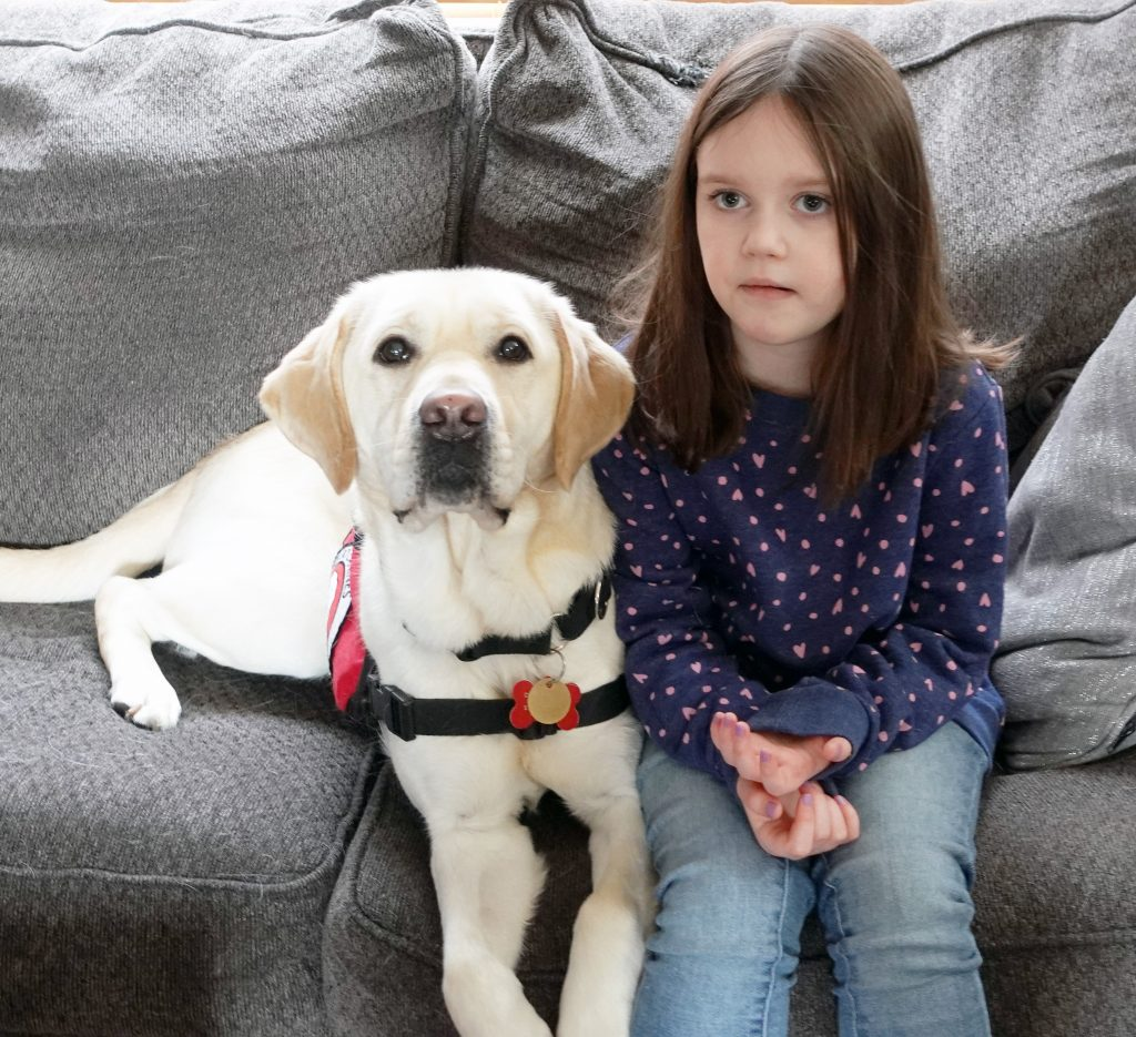 yellow Lab service dog and young girl sitting on couch