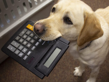 dog holding calculator in mouth