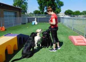 three large dogs sitting at attention with staff member outside