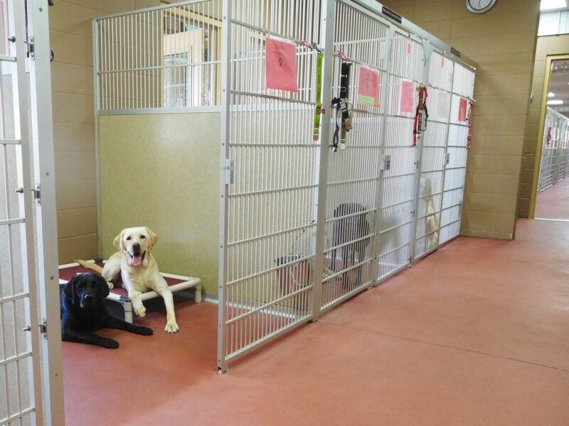 dogs in indoor kennel housing