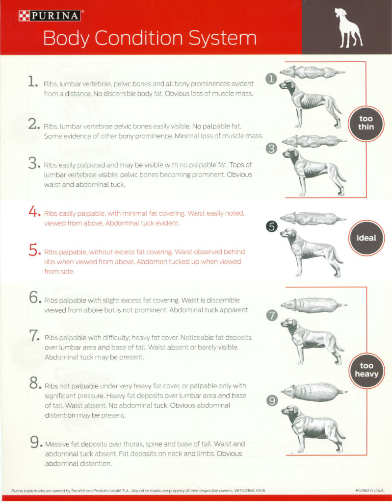 body conditioning score details for dogs
