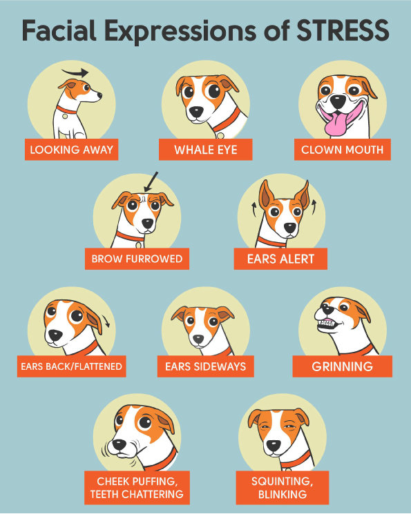 cartoons of facial expressions of stress in dogs