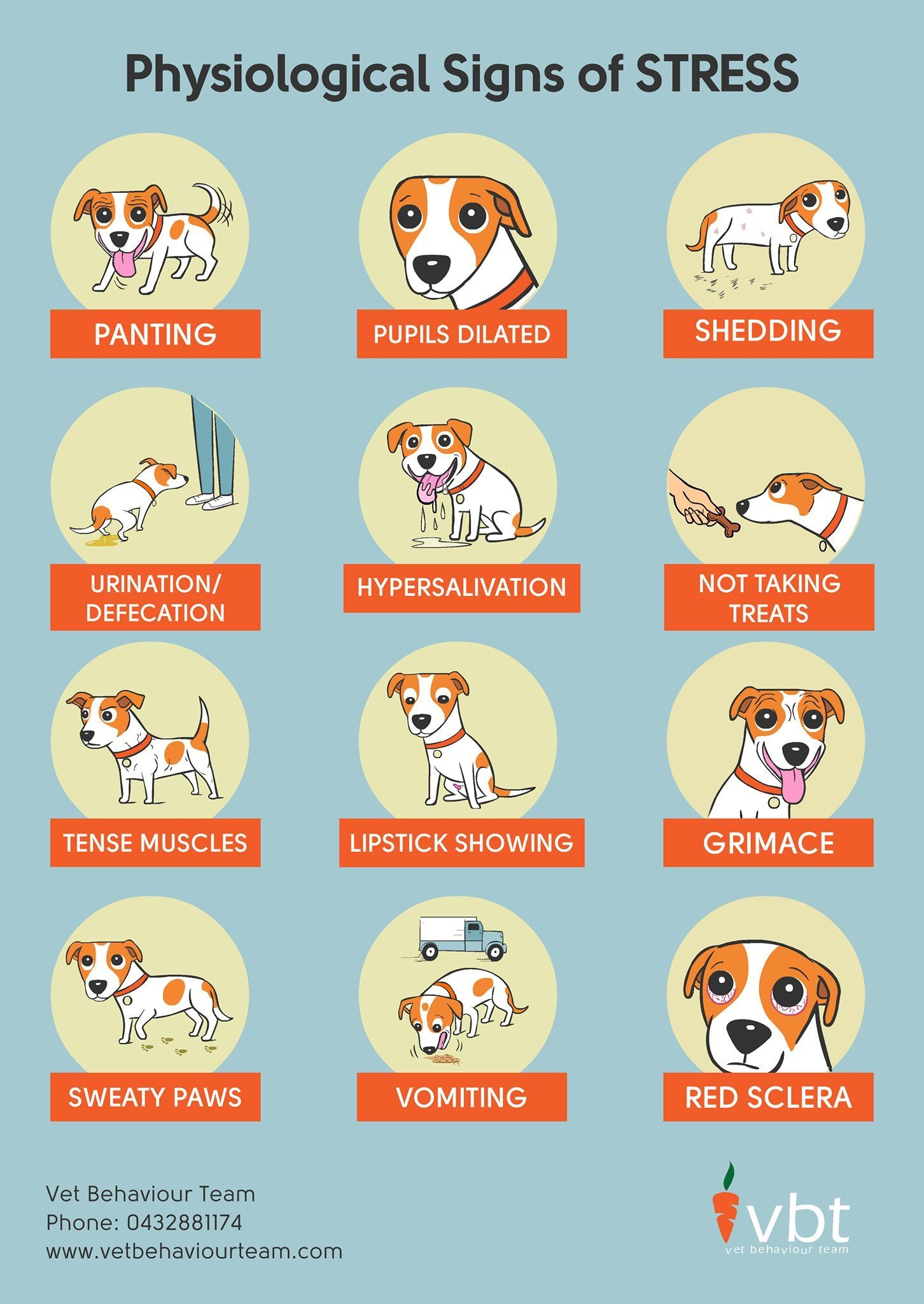 cartoons of physiological signs of stress for dogs