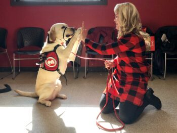 large service dog sitting on haunches and high-fiving woman kneeling on floor